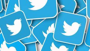 twitter bird social
