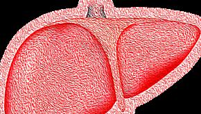 liver,hepaitis,pink,gb
